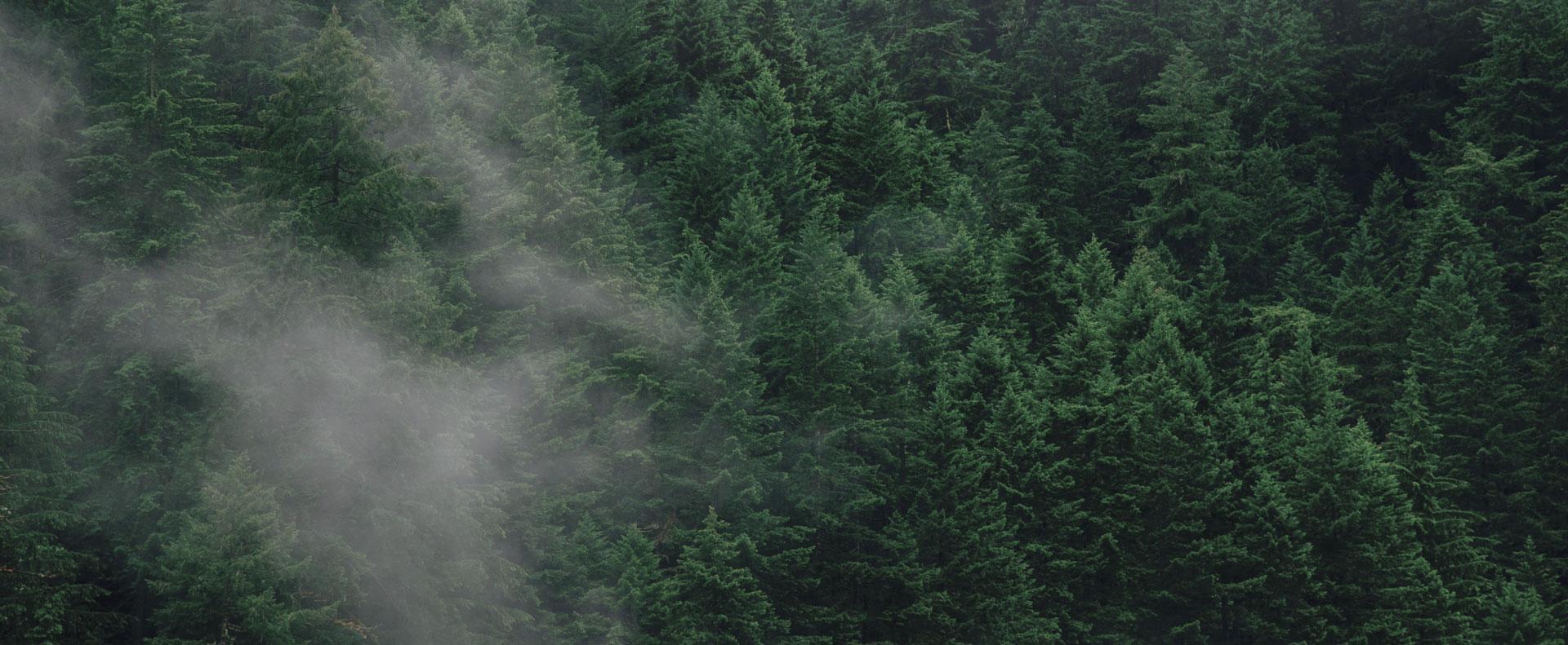 Image décorative : Environnement